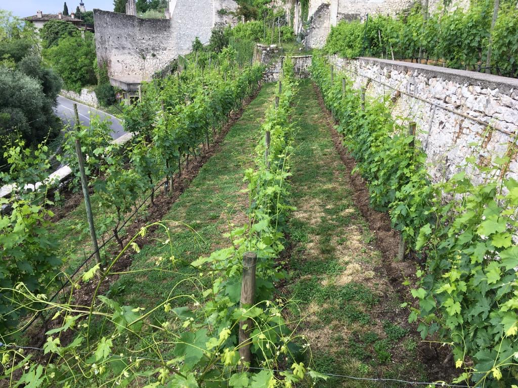 The Food and Wine of Gargnano